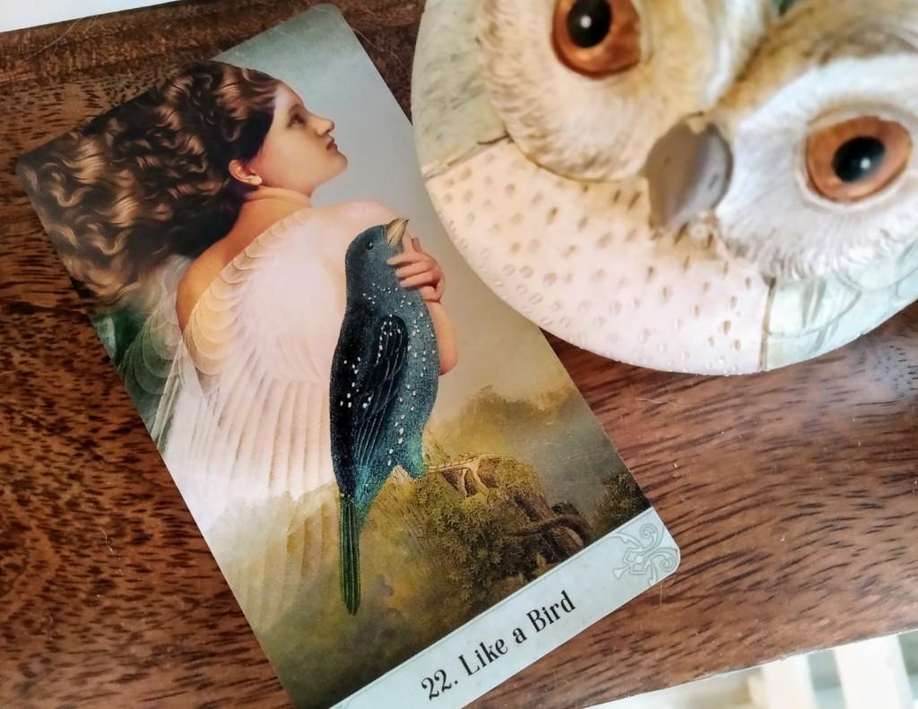 motivation, bird card, message from the bird