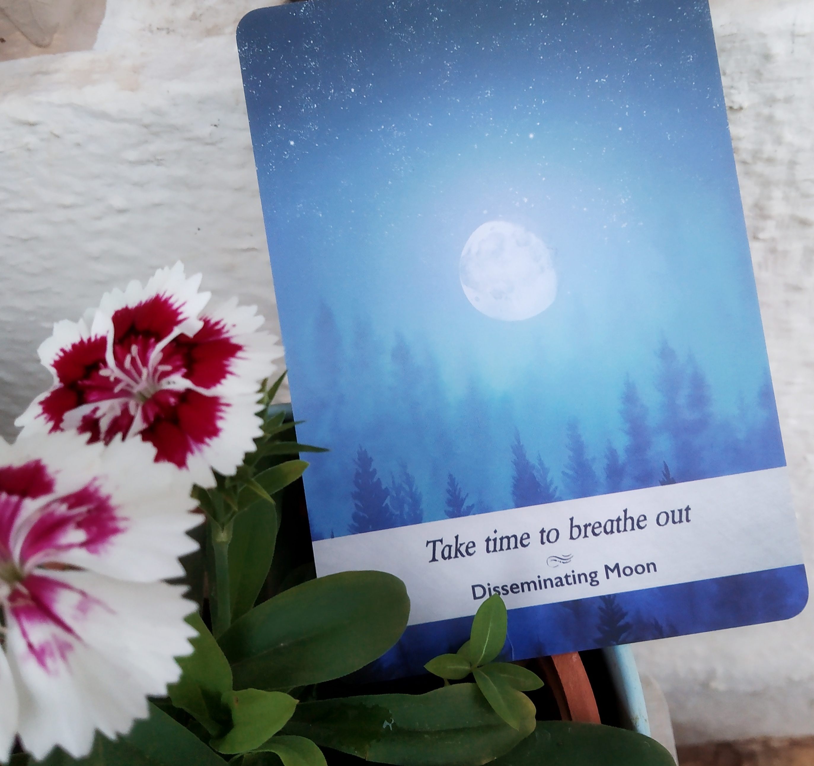 disseminating moon, moonology yasmin galoren, oracle card moon,
