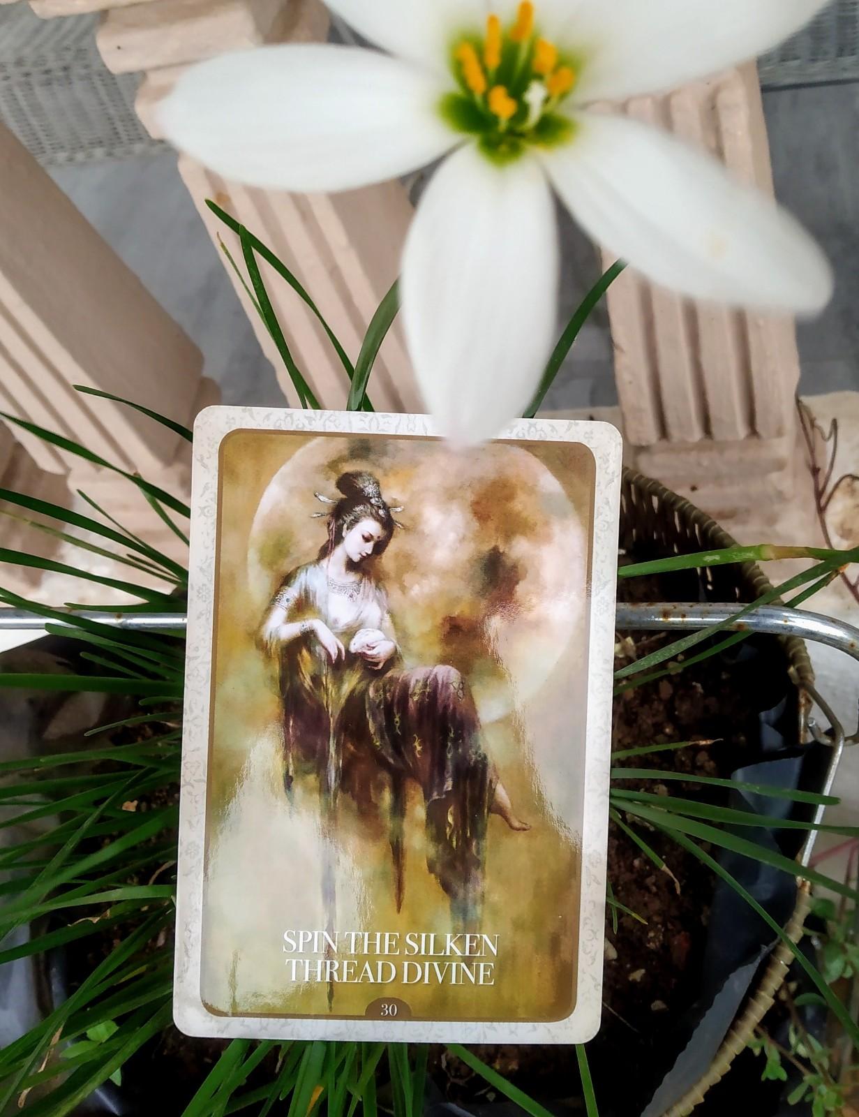 Spin the silken thread quan yin oracle alana fairchild. todays tarot reading.